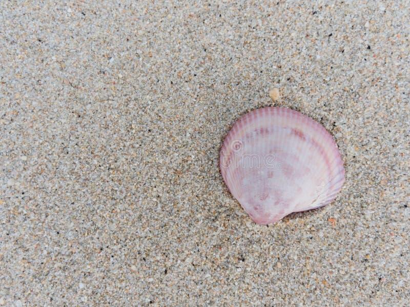 Cáscara blanca, rosada, y púrpura de la almeja sobre fondo arenoso de la textura fotos de archivo libres de regalías
