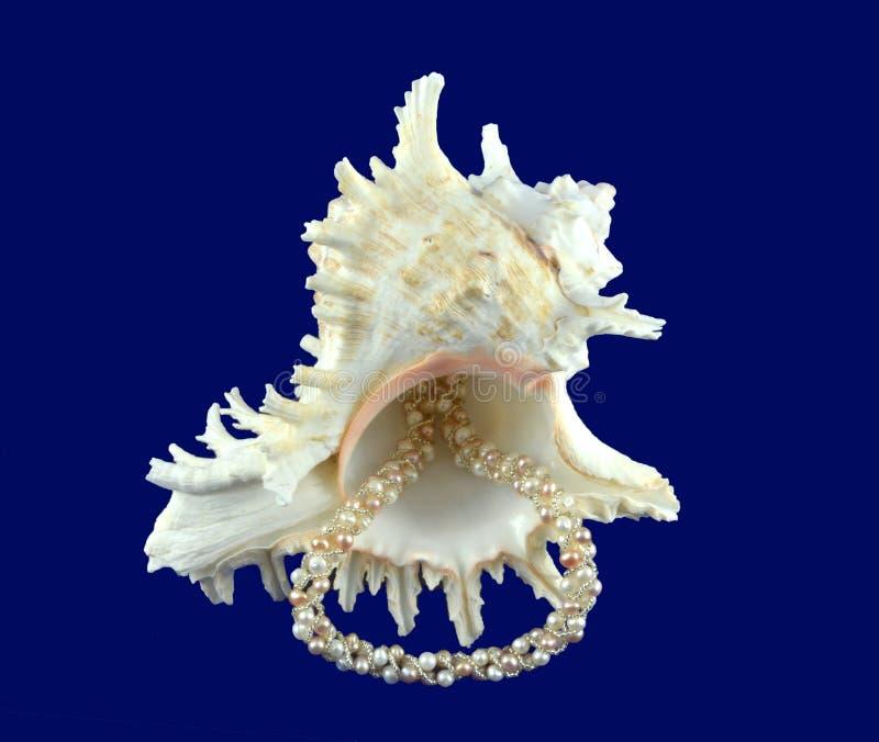 Collar del Seashell y de la perla fotos de archivo