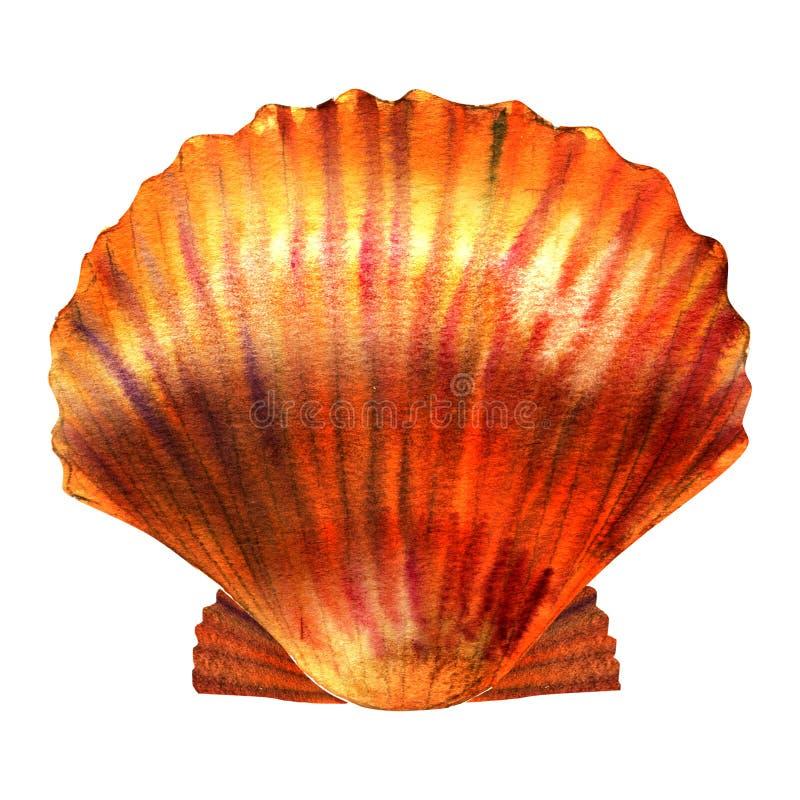 Cáscara de concha de peregrino, concha marina, aislada, ejemplo de la acuarela en blanco stock de ilustración