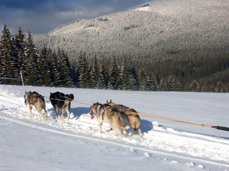 Cáscara de la perrera en nieve imagenes de archivo