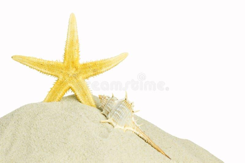 Cáscara de las estrellas de mar y del mar aislada fotografía de archivo