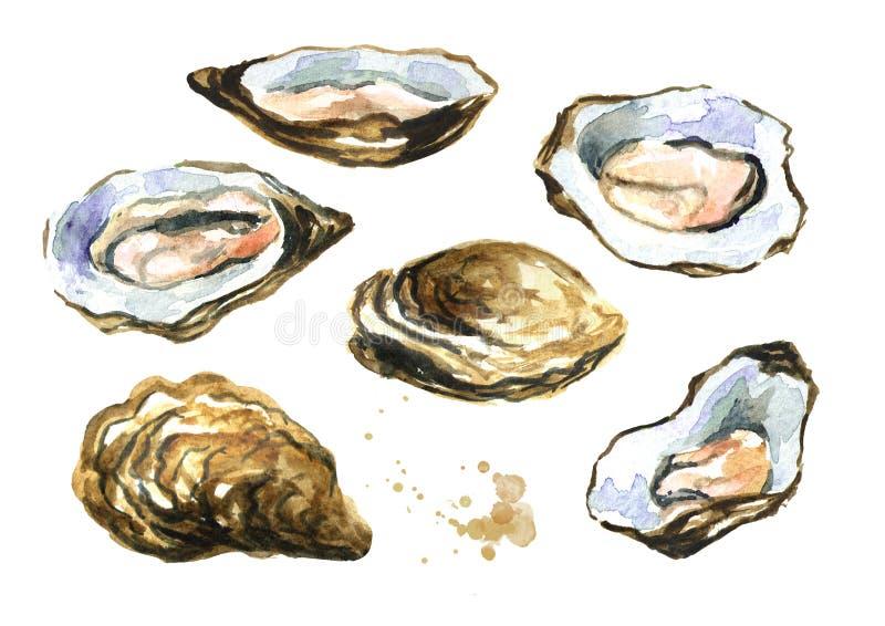 Cáscara de ostra, sistema de los mariscos Ejemplo dibujado mano de la acuarela aislado en el fondo blanco stock de ilustración