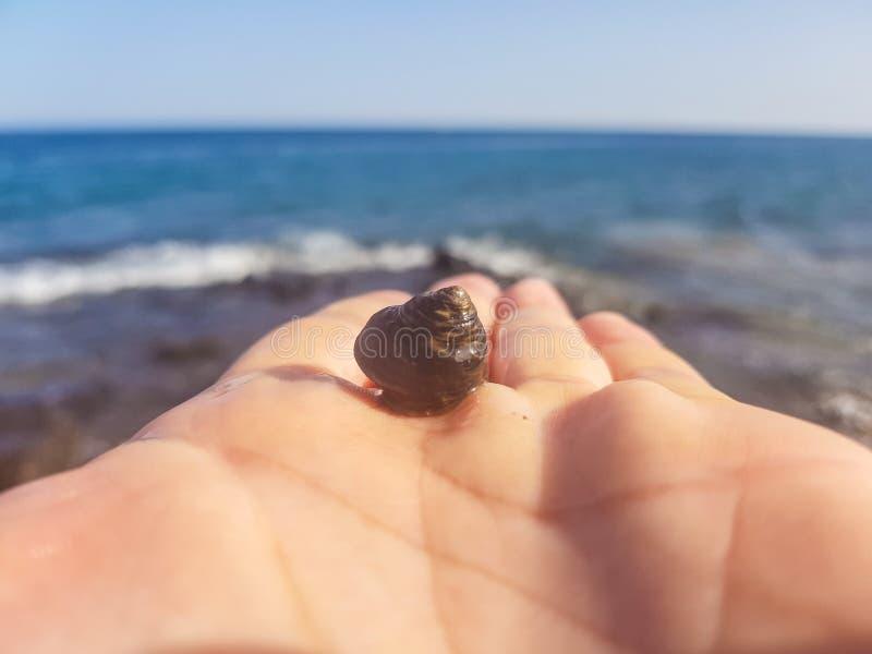 cáscara del ‹del †del ‹del †del mar en la palma contra el mar imagen de archivo