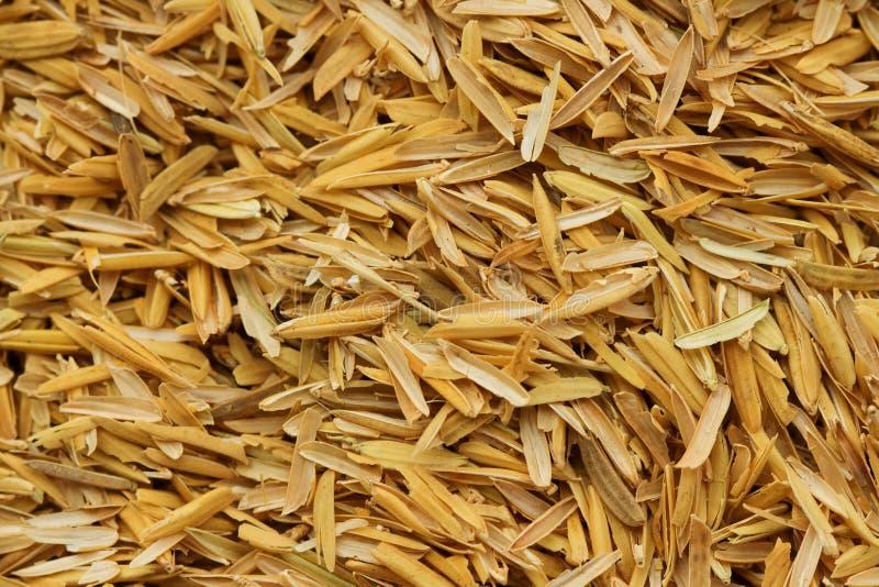 Cáscara del arroz, cultivando los materiales foto de archivo libre de regalías