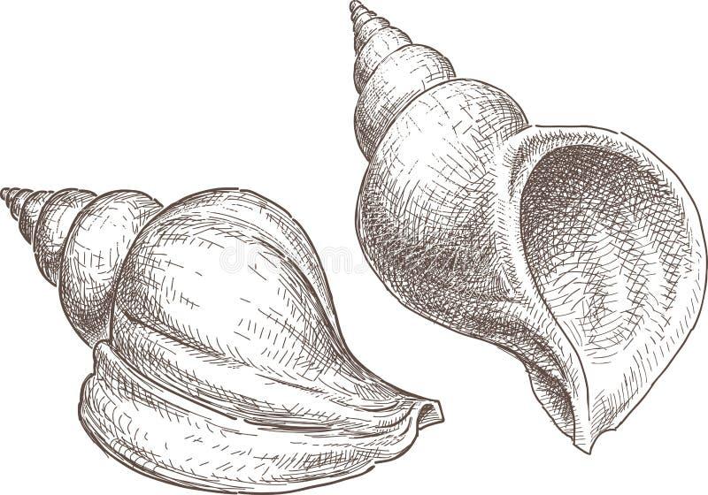 Cáscara del mar ilustración del vector