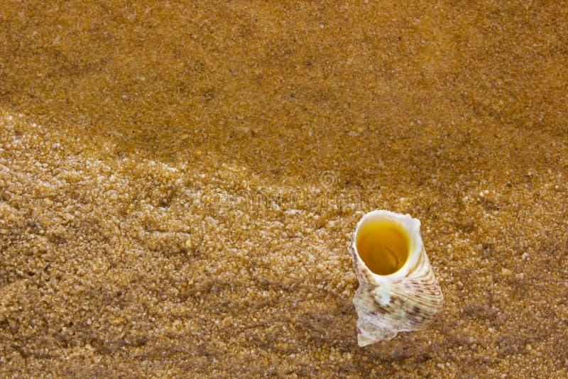 Cáscara del mar en el arena de mar imagen de archivo