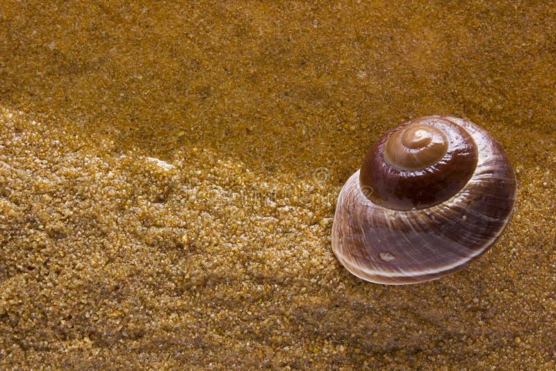 Cáscara del mar en el arena de mar fotos de archivo