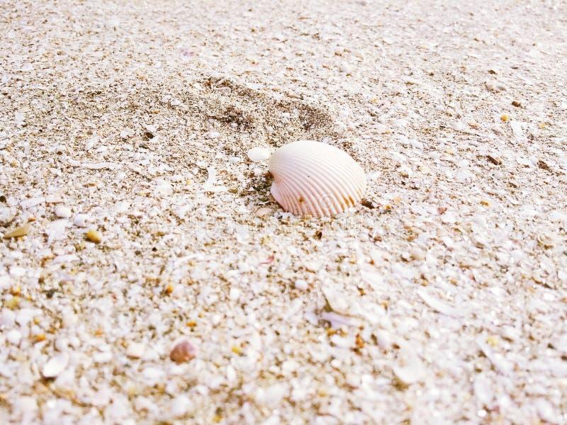 Cáscara del mar en la playa fotografía de archivo