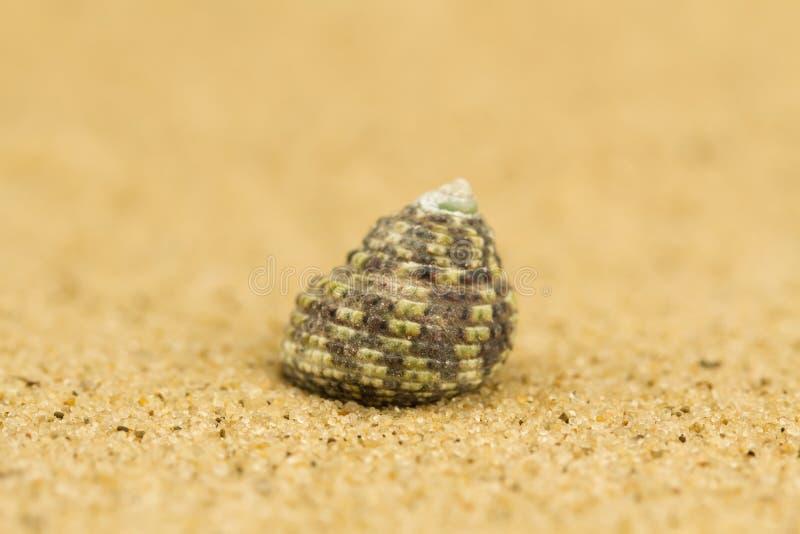 Cáscara del mar la arena Macro foto de archivo libre de regalías