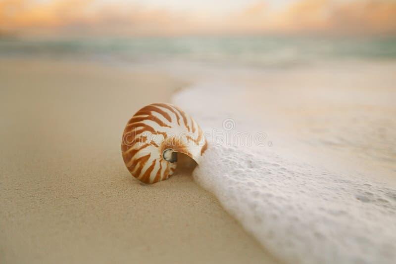 Cáscara del mar del nautilus en ight suave de la salida del sol de la playa fotografía de archivo