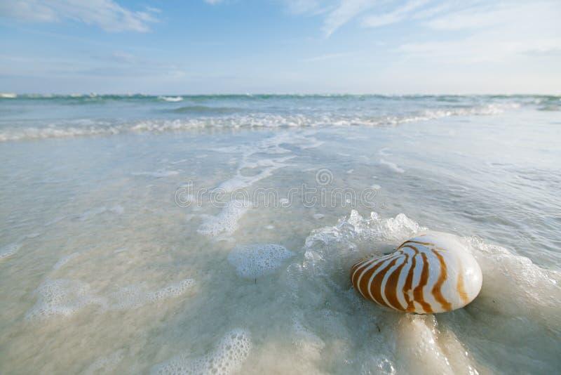 Cáscara del nautilus con la onda del mar, playa de la Florida bajo ligh del sol imagen de archivo libre de regalías