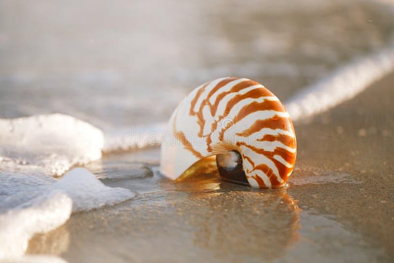 Cáscara del nautilus en la arena blanca de la playa de la Florida bajo luz del sol fotos de archivo libres de regalías