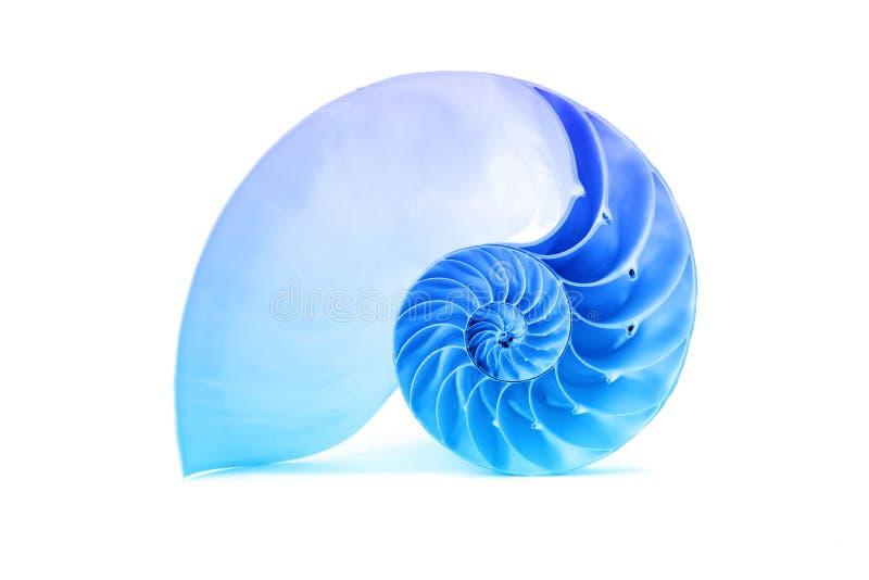 Cáscara del nautilus y modelo geométrico azul famoso de Fibonacci fotografía de archivo