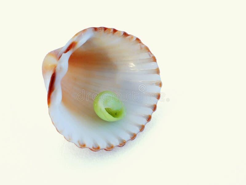 Cáscara II del mar imagen de archivo
