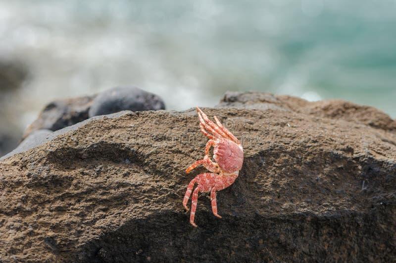 Cáscara muerta del cangrejo imagen de archivo libre de regalías