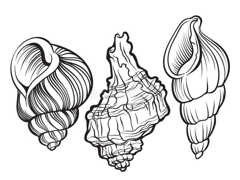 Cáscaras ilustración del vector
