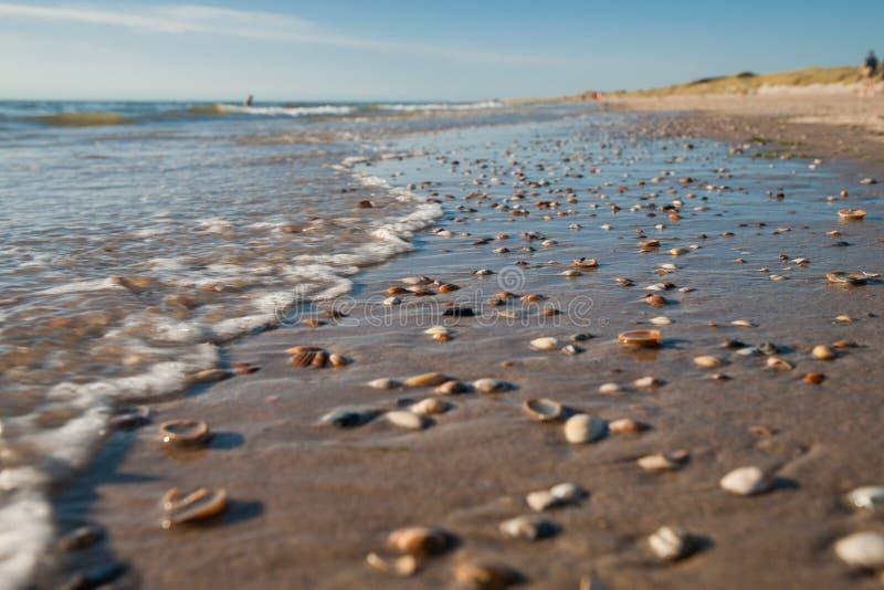 Cáscaras conmovedoras del mar con diversos colores debajo de las arrugas de fotografía de archivo libre de regalías