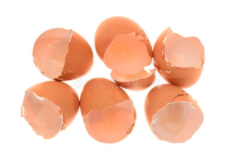 Cáscaras de huevo del pollo foto de archivo