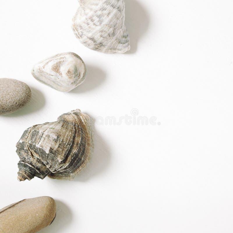 Cáscaras de la concha del mar y piedra marina aisladas en el fondo blanco Endecha plana imágenes de archivo libres de regalías