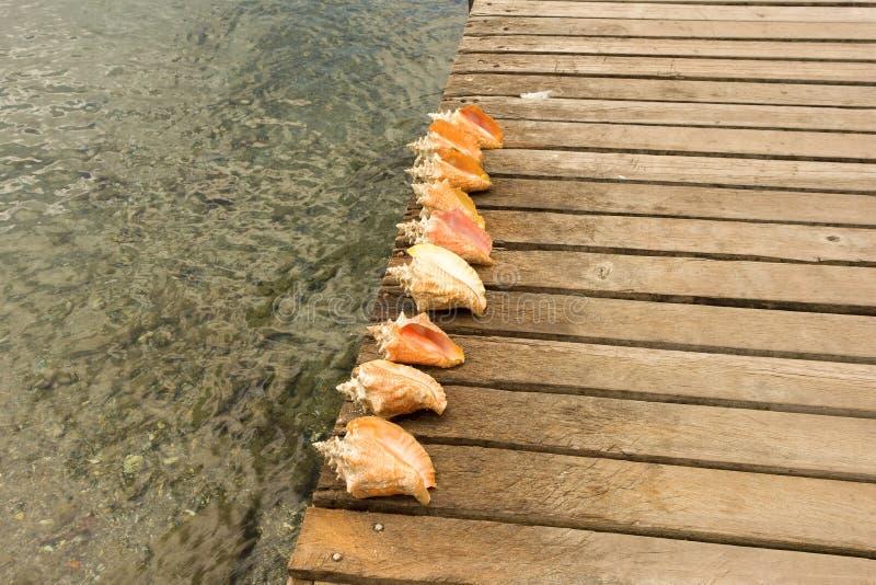 Cáscaras de la concha en un embarcadero de madera fotografía de archivo libre de regalías