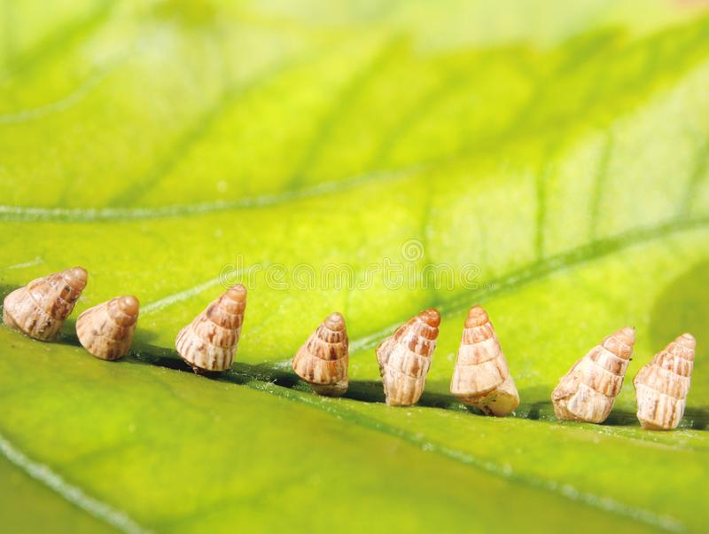 Cáscaras del caracol en la hoja verde fotografía de archivo libre de regalías