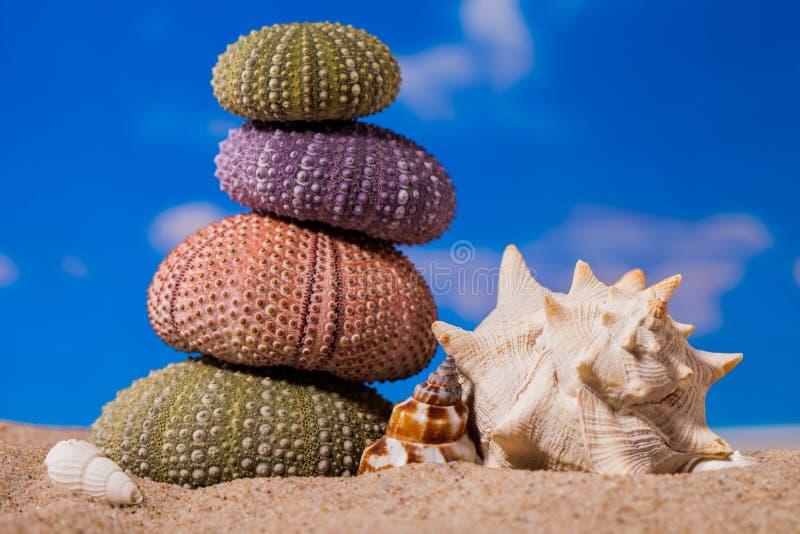 Cáscaras del erizo del mar en fondo de la arena y del cielo azul foto de archivo libre de regalías