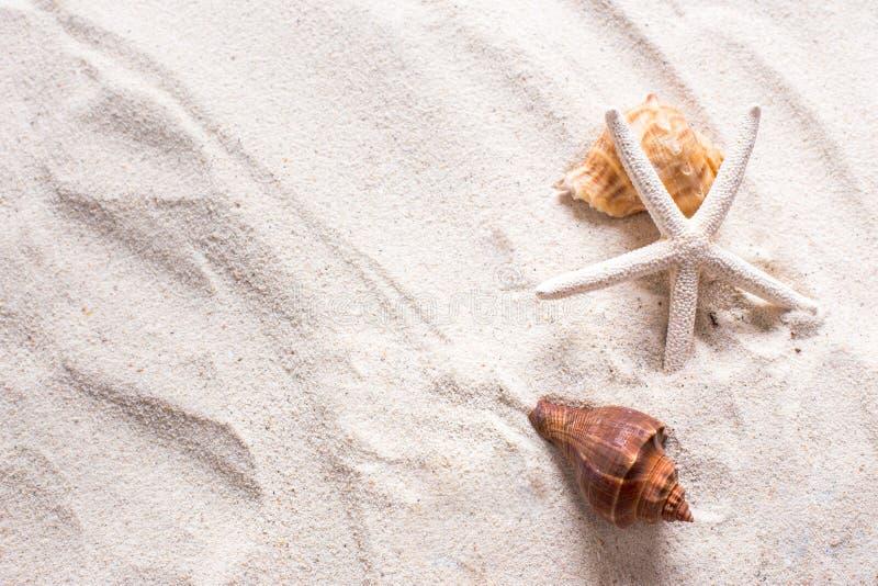 cáscaras del mar con la arena como el fondo y copyspace, concepto del verano imagenes de archivo