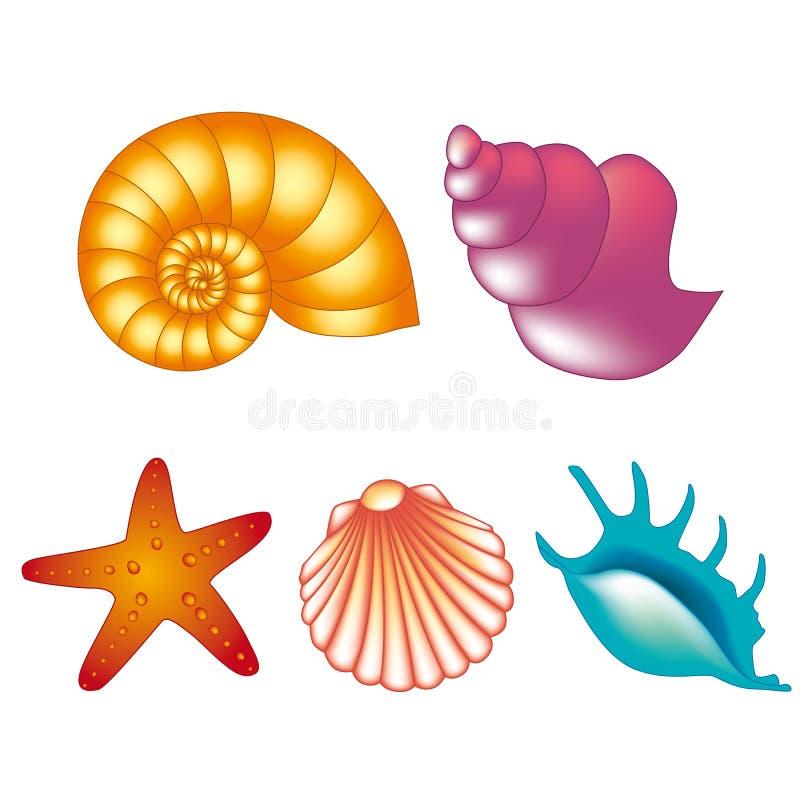 Cáscaras del mar del vector ilustración del vector