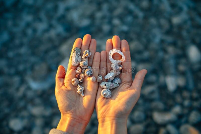 Cáscaras del mar en la mano foto de archivo