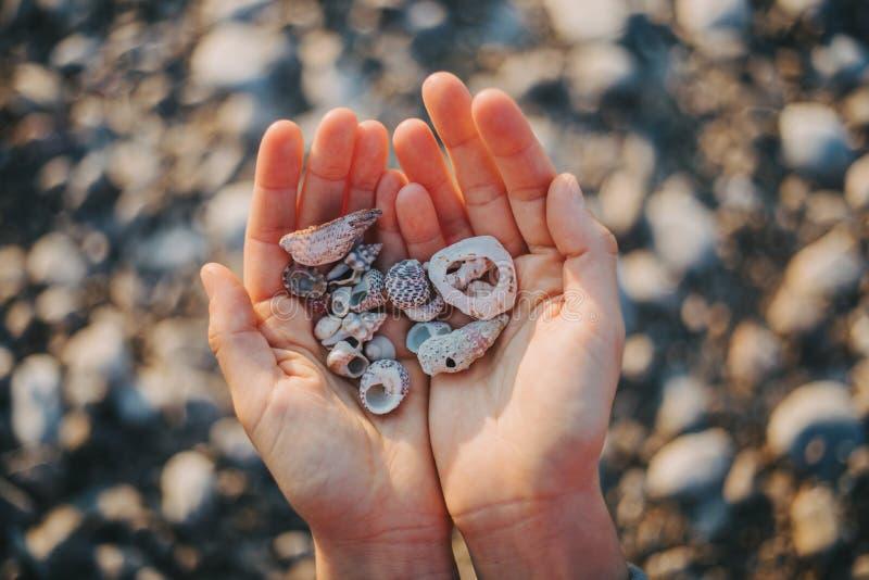 Cáscaras del mar en la mano imágenes de archivo libres de regalías
