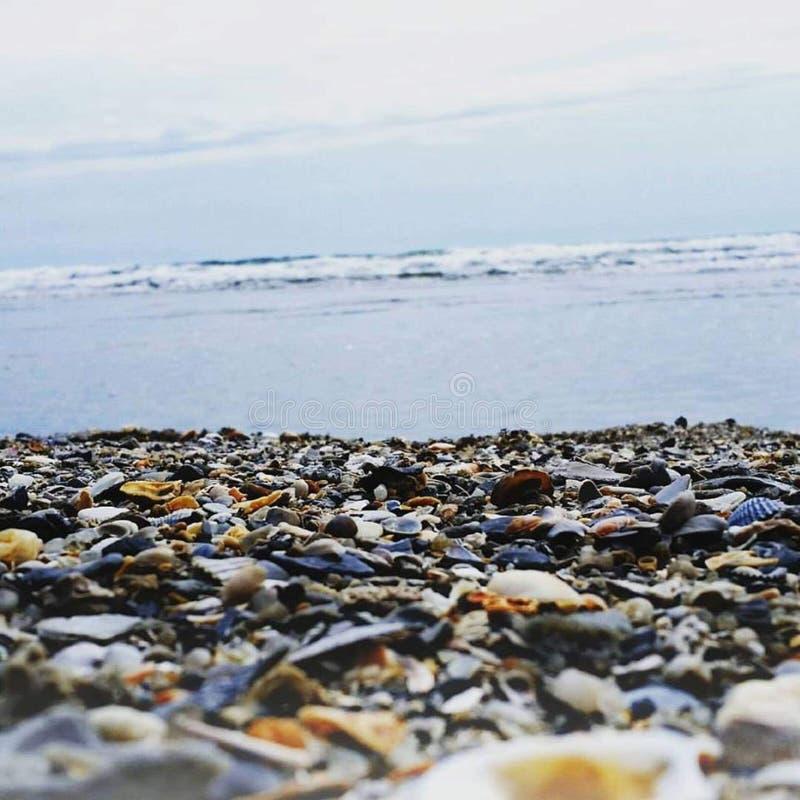 Cáscaras del mar en la orilla imagen de archivo
