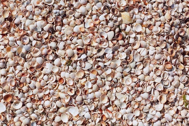 Cáscaras del mar en la playa de la arena Composición de las cáscaras exóticas del mar Cáscaras de la diversa clase como fondo End foto de archivo libre de regalías