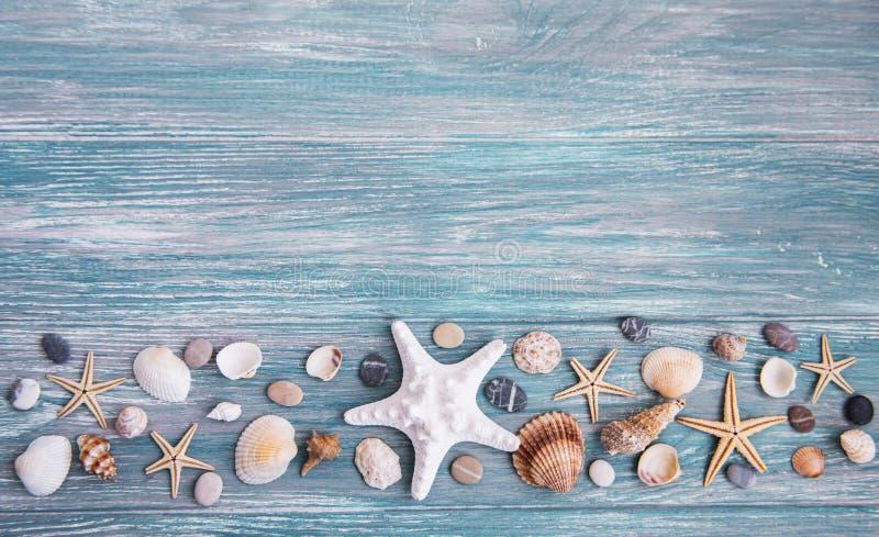 Cáscaras del mar en una tabla de madera imagenes de archivo