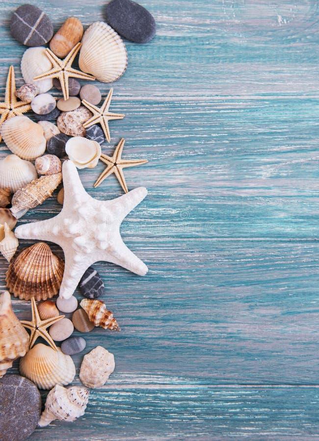 Cáscaras del mar en una tabla de madera imagen de archivo