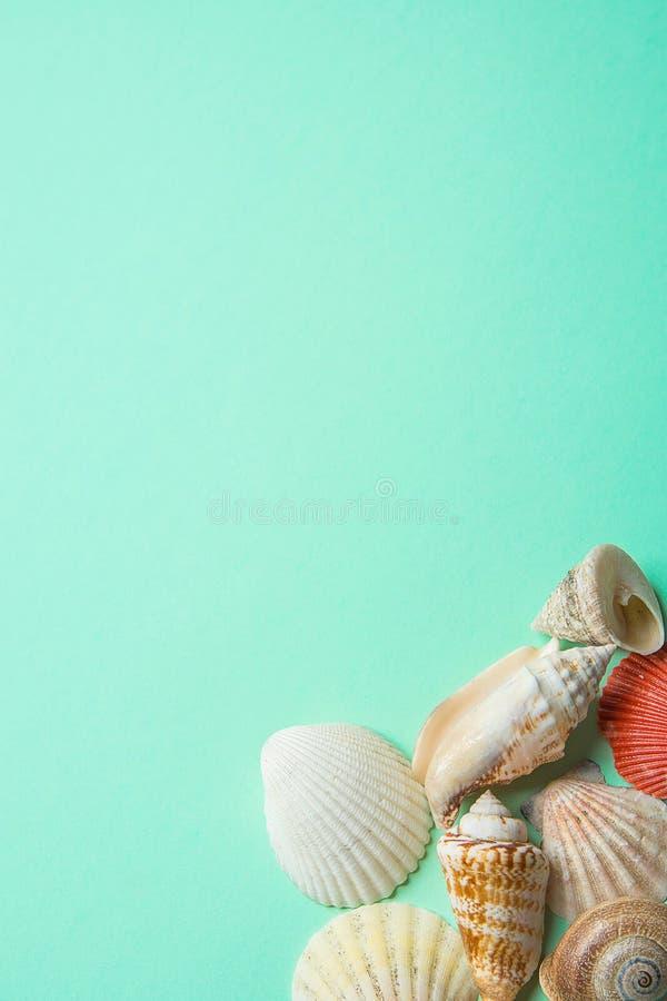 Cáscaras del mar del espiral redondo plano de diversas formas en fondo de la turquesa Foto común diseñada moderna minimalista par imagen de archivo
