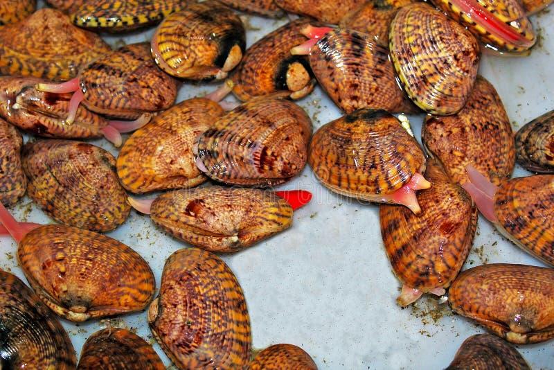 Cáscaras del mar, klemy vendida para la comida imagen de archivo libre de regalías
