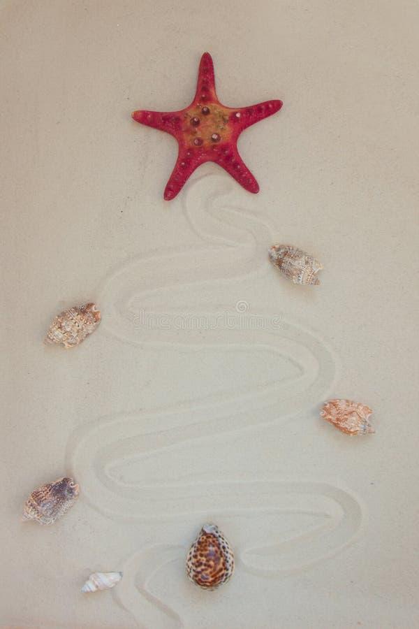 Cáscaras del mar y pescados rojos de la estrella en la playa arenosa con el espacio de la copia para el texto Concepto de la Navi foto de archivo libre de regalías