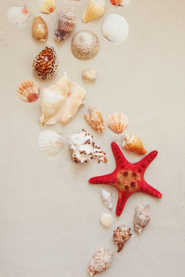 Cáscaras del mar y pescados rojos de la estrella en la playa arenosa con el espacio de la copia para el texto foto de archivo