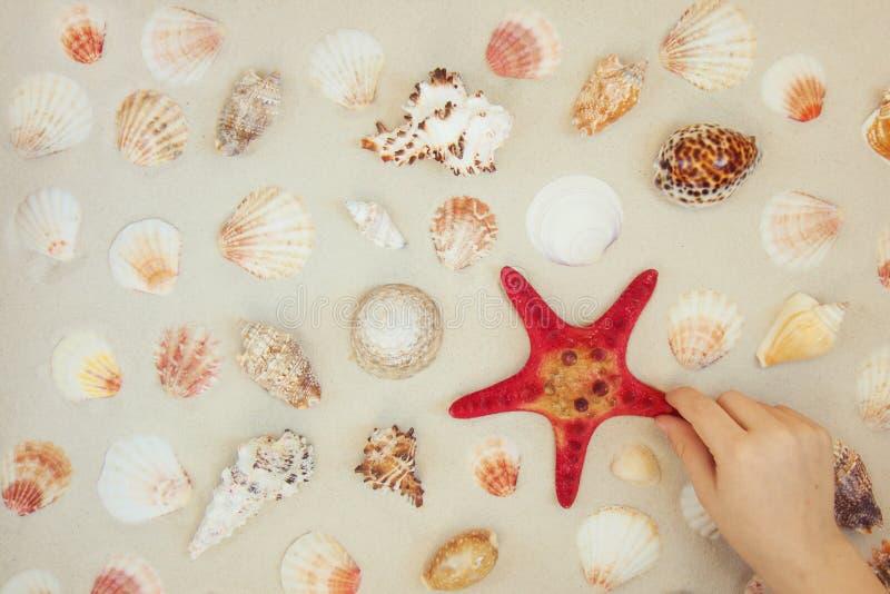Cáscaras del mar y pescados rojos de la estrella en la playa arenosa con el espacio de la copia para el texto imagenes de archivo