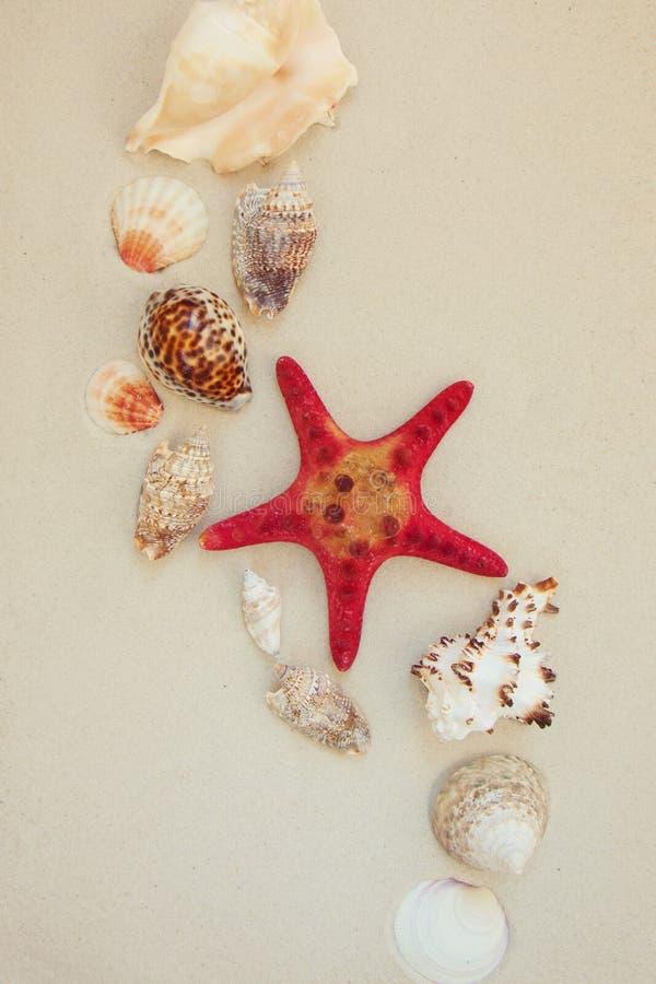Cáscaras del mar y pescados rojos de la estrella en la playa arenosa con el espacio de la copia para el texto foto de archivo libre de regalías