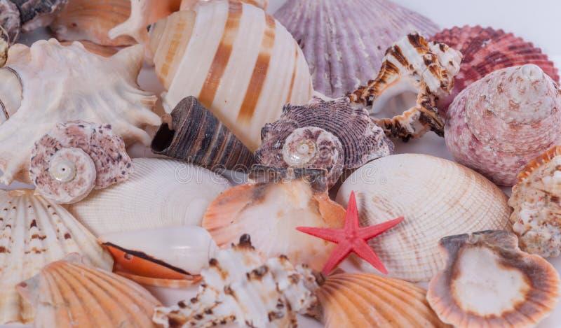 Cáscaras del mar y una estrella de mar fotos de archivo libres de regalías