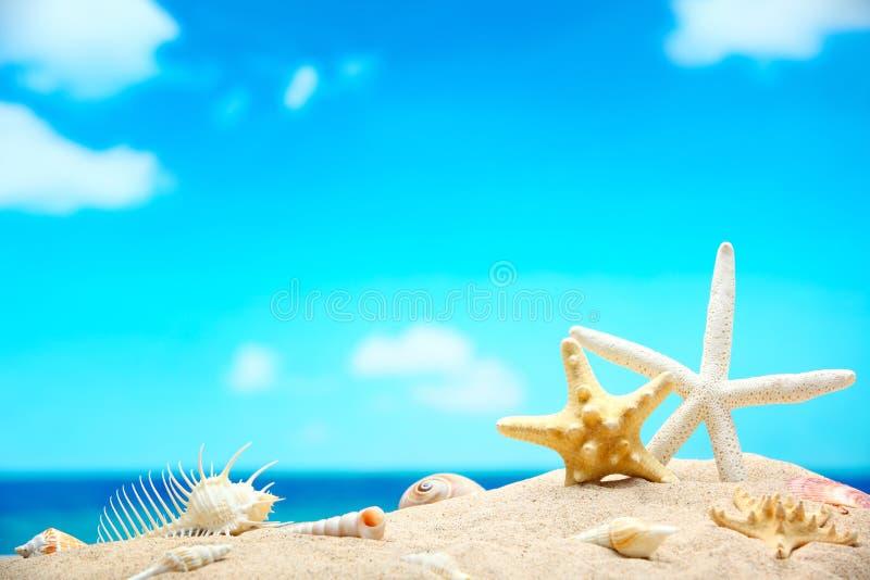 Cáscaras en la playa imágenes de archivo libres de regalías