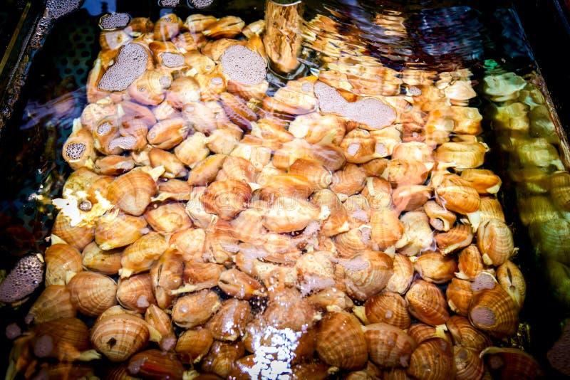Cáscaras para la venta, almejas del mar dentro del acuario en un restaurante imagen de archivo