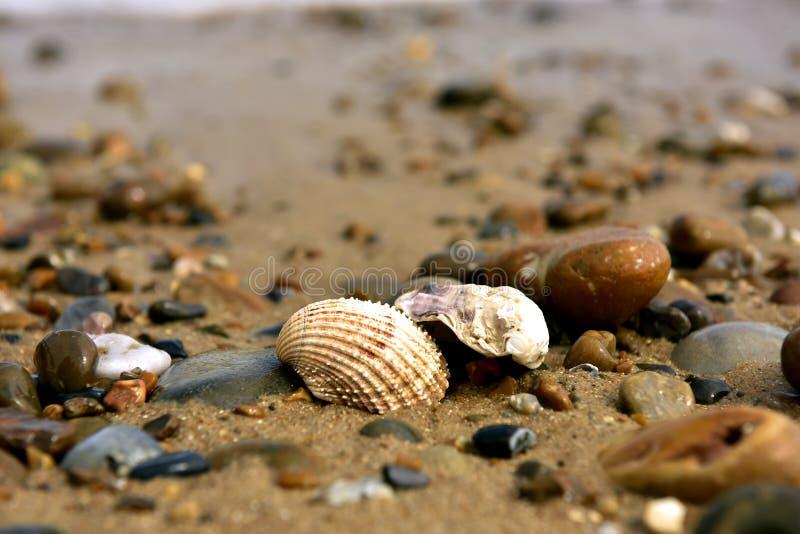 Cáscaras, piedras, arena imagen de archivo libre de regalías