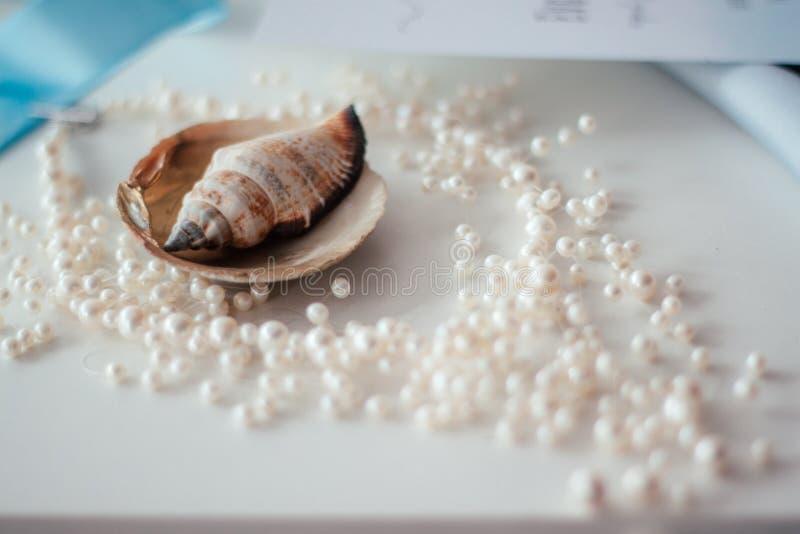 Cáscaras y collar de perlas imagen de archivo libre de regalías