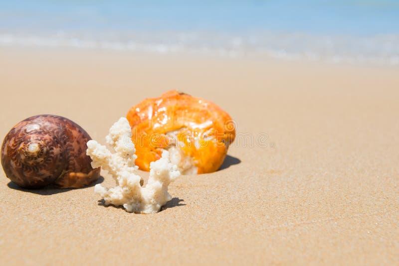 Cáscaras y coral del mar en la playa de la arena fotos de archivo