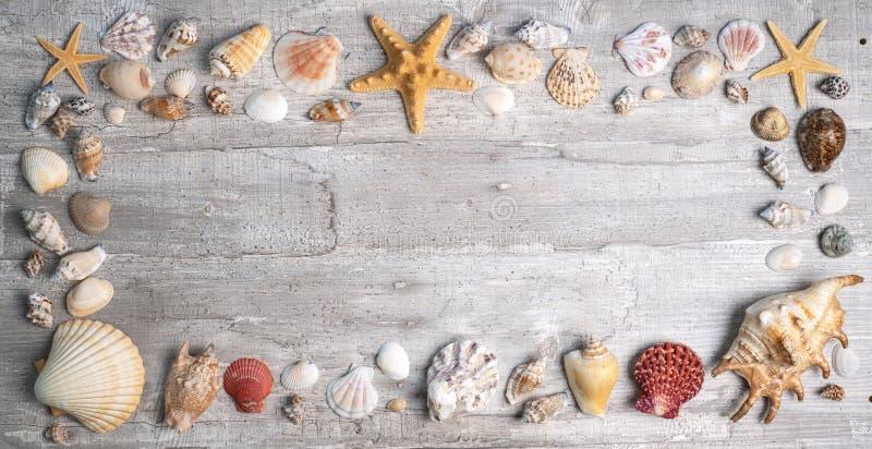 C?scaras y estrellas de mar en un fondo de madera fotografía de archivo libre de regalías