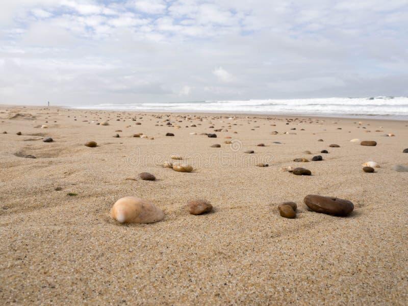 Cáscaras y rocas en la playa durante la bajamar imagen de archivo