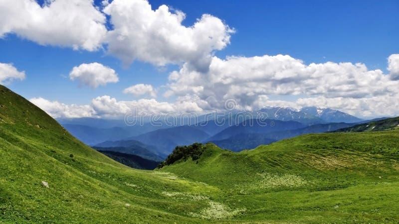 Cáucaso de surpresa imagem de stock royalty free