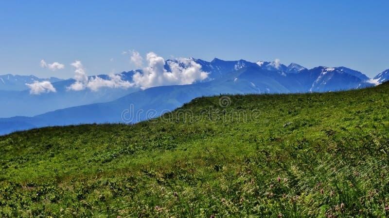 Cáucaso de surpresa fotografia de stock royalty free